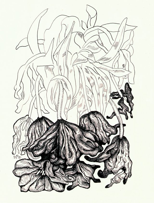 Walter Pfeiffer, Untitled., Ink on paper, 1991.