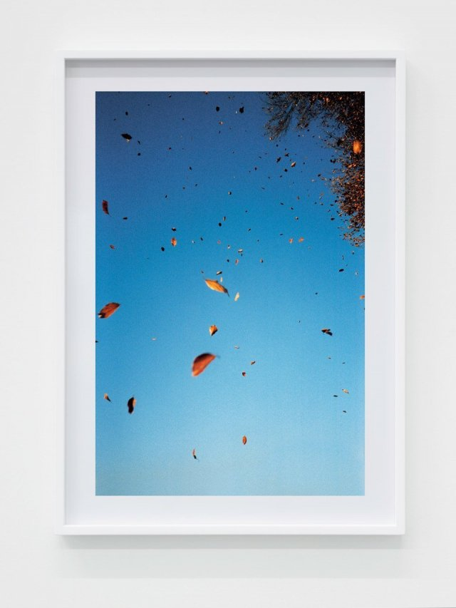 Walter Pfeiffer, Autumn leaves, 2018. Courtesy of the Artist and Gregor Steiger.