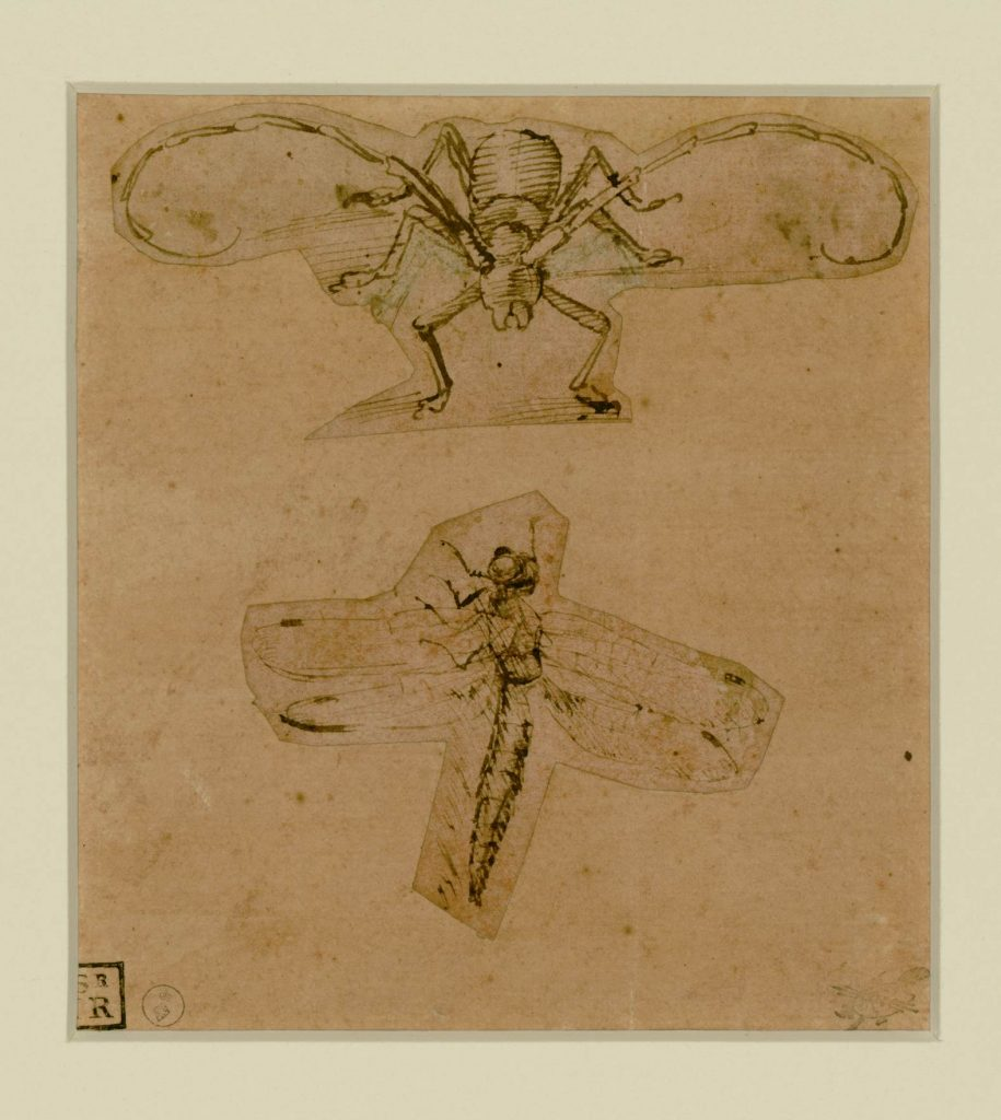 leo insects