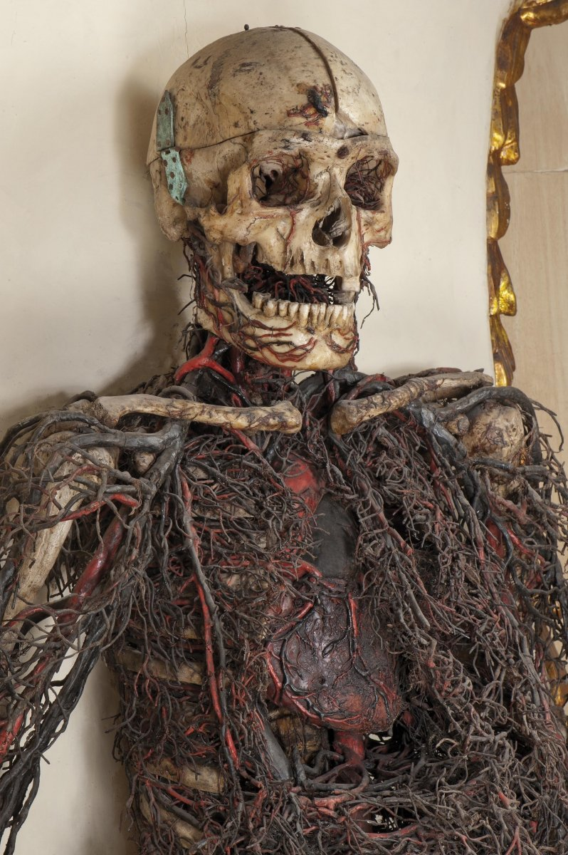 18th century anatomical machine from the Chapel and Museum of Sansevero, Naples.